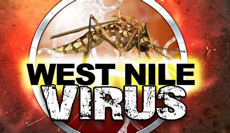 What you Should Know about the West Nile Virus