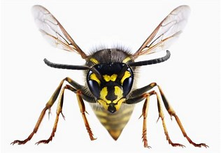 Wasps…How to Avoid a Sting!