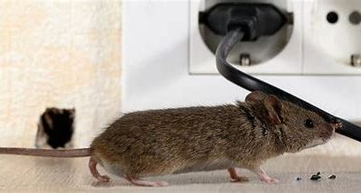 How to Mouse-Proof Your Home!