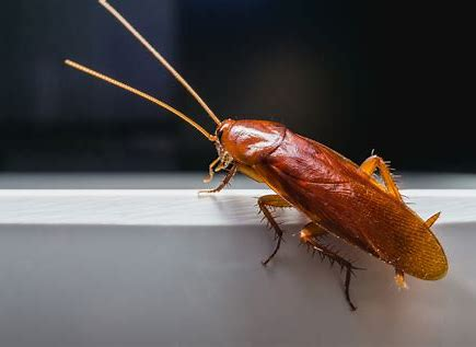 Roaches…Why Are they Super-Survivors?