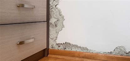 Preventing Mold After a Flood