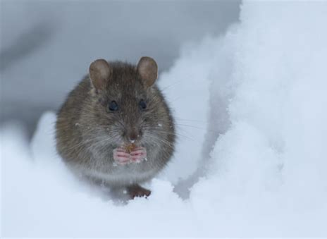 Winter Pest Control in Your Home