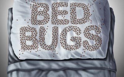 The Basics of Bed Bugs