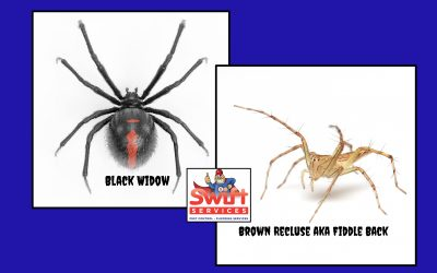Most Dangerous Oklahoma Spiders